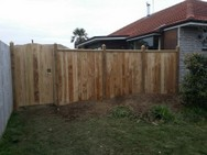 Fence and Gate over Bay leaf tree.jpg